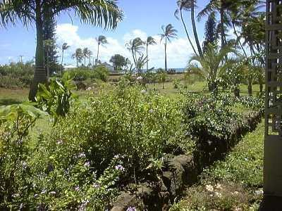 Prince Kuhio Studio, glimpse of ocean - Ocean VU Prince Kuhio Affordable Studio w/KITCHEN - Poipu - rentals