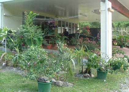 Stans Mansion, Rarotonga - Image 1 - Avarua - rentals