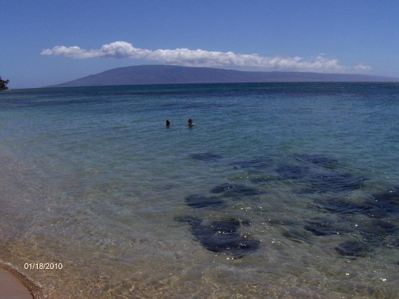 swim and snorkel with the turtles right from our shore! Maui beachfront vacation rentals. - Corner 2brm 2ba Beachfront  Condo - Lahaina - rentals