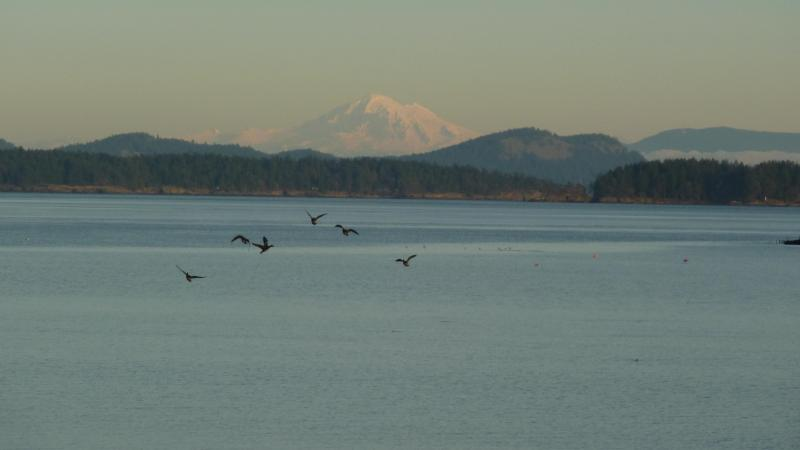 Snow Capped Mount Baker in the distance - Eaglesnest Beachfront Vacation Home on Roberts Bay - Sidney - rentals