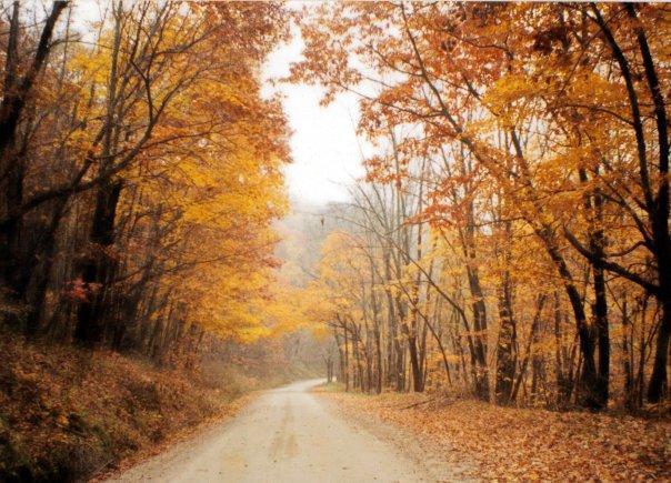 Fall Leaves - The Loft in Lansing, Iowa - Lansing - rentals