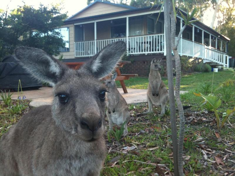 Come join us at Bush & Bay Cottage - Bush & Bay Cottage, Jervis Bay - Natures doorstep - Jervis Bay - rentals