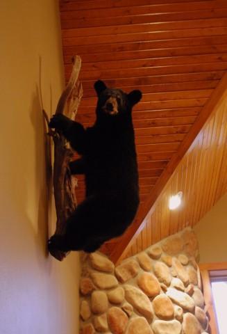 Black Bear Lodge - 7 Master Suites-sleeps 24 - Image 1 - Branson - rentals