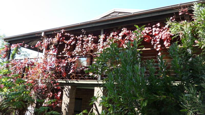 Wonderful Mountain retreat - Self contained House in the Blue Mountains. - Faulconbridge - rentals