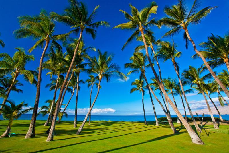 Sapphire Seas Beach Estate - Grass Lawn and Property Running Down to the Ocean's Edge - Sapphire Seas Beach Estate - Kihei - rentals