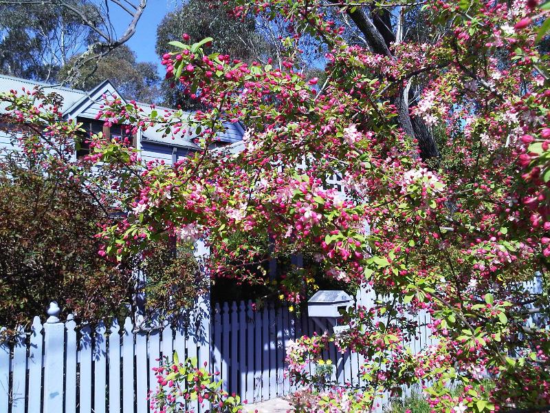 Spring Blossoms at Lavender Manor - Lavender Manor - Beaches and Mountains Girls Getaways Venue - Blackheath - rentals