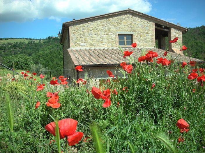 Our spring poppies by your vacation home - Charming Casa Voltole  with wheelchair access - Passignano Sul Trasimeno - rentals