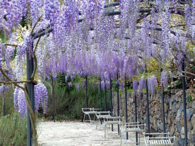 An arcade of wisteria marks the perimeter of the wonderfully restored garden. - Cava di Calbello - Siena - rentals