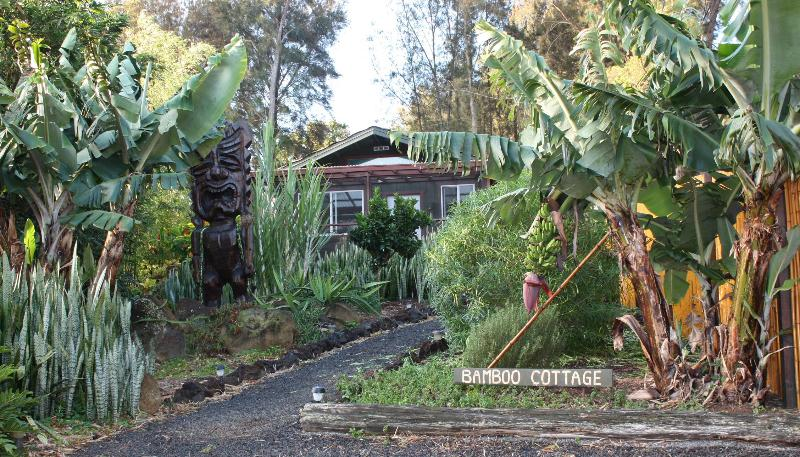 The Bamboo Cottage and Tiki Tomba surrounded with Dragon fruit, Bananas, Blood Orange, & Sugar Cane - The Bamboo Cottage and Tiki Tomba - Hawi - rentals