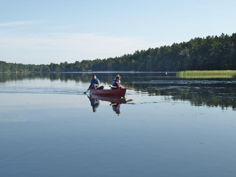 A morning paddle on the pond - Maine, cozy cabin on pristine lake - Ledge Lodge - Sedgwick - rentals