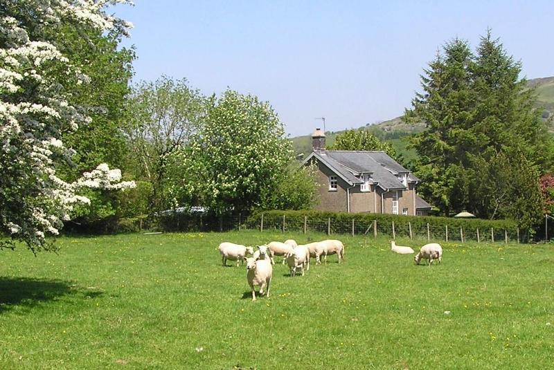 Cottage nestles amongst trees, southerly aspect - Farm cottage sea mountains Snowdonia Gwynedd - Llanbedr - rentals