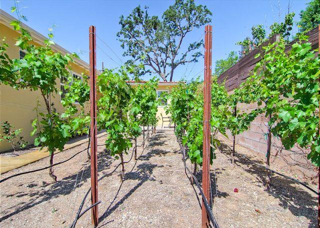 The Zin Yard - Image 1 - Paso Robles - rentals
