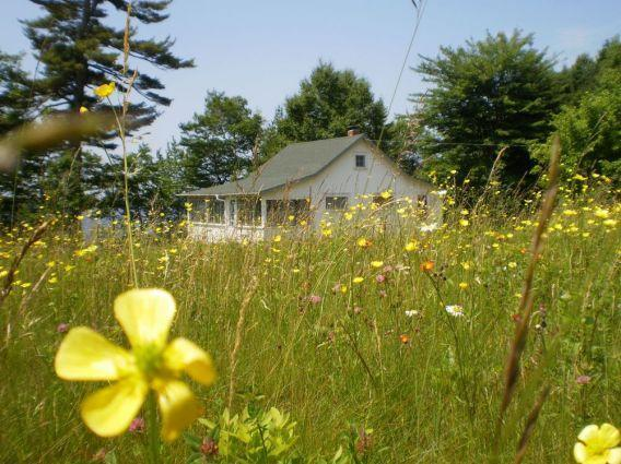 View of Wildflower through fields of wildflowers looking west toward Boyden Lake - Wildflower Cottage - Perry - rentals