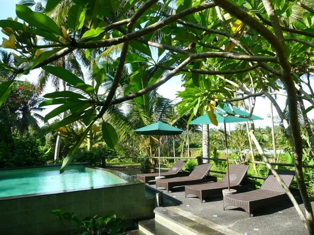 Swimming pool with sunbeds - Garden Apartment 1BR, 1BA, 1 Living/Kitchenette - Ubud - rentals