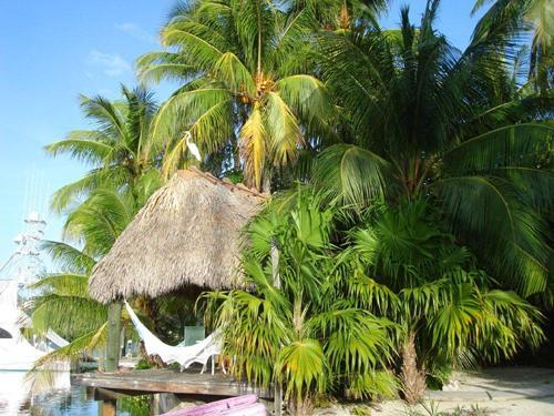 The relaxing and oh so very secluded tiki hut! - Islamorada Waterfront Paradise Getaway! - Islamorada - rentals
