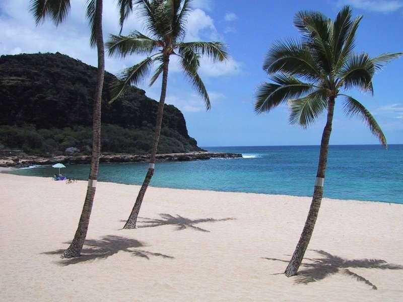 Come sit under one of our Coconut Palms! - Romantic Beachfront Condo - Completely Renovated! - Makaha - rentals