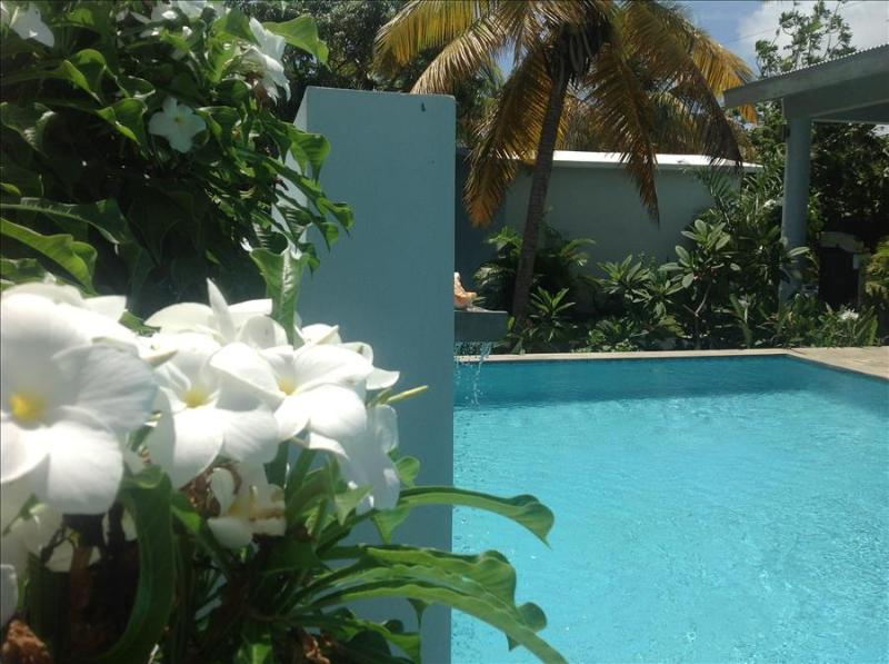 Garden House - Four Bedrooms, Sexy Pool and Porches - Image 1 - Vieques - rentals