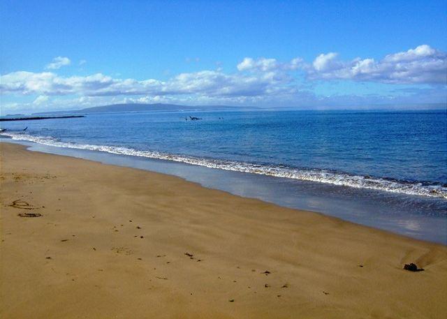 Kihei Bay Vista - Kihei Bay Vista #D-207, 1B/1Ba, Steps from the Beach. Sleeps 2 - Kihei - rentals