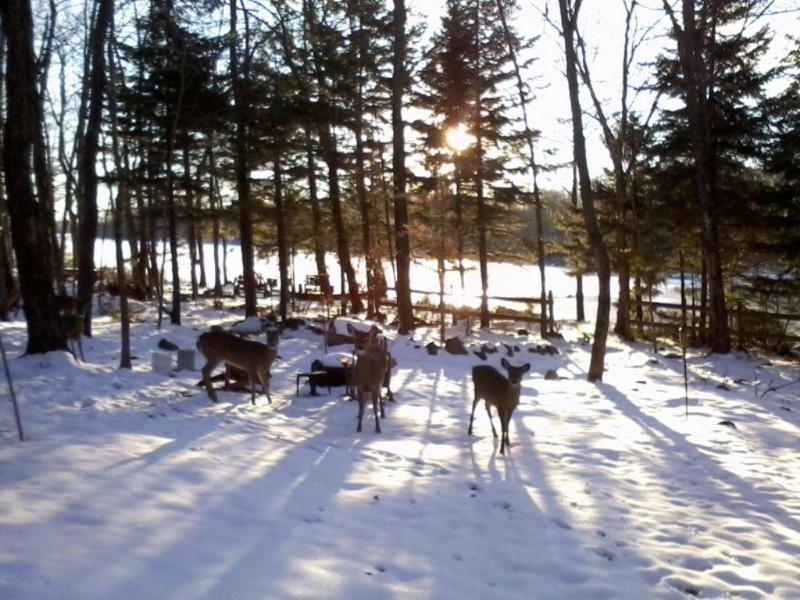 Are these Shoppers/Skiiers Arriving or Hunters? - Secluded Lakefront Getaway-SPRING W/E's Only $495 - Mount Pocono - rentals