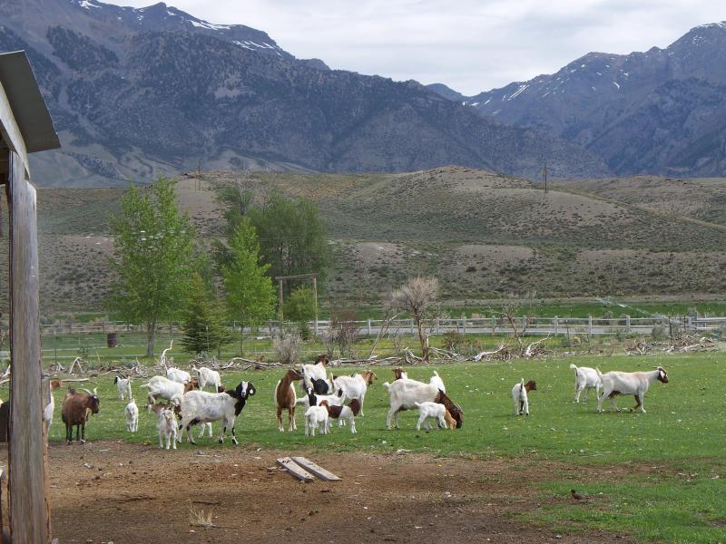 Windysage Goat Ranch - Windysage Farmstay B&B - Mackay - rentals