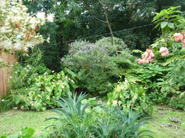 Garden corner - Costa Rica - Lake Arenal - Nice Cabin for rent - Tilaran - rentals