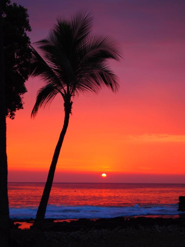 Kona Sunset - SALE Dolphins & Whales from Lanai Ocean View - Kailua-Kona - rentals