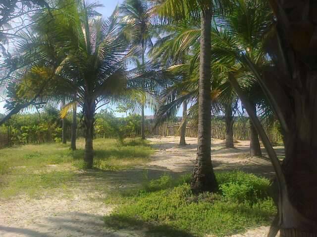 Quintal - Casa na Praia de Barra Grande - Piaui - Barra Grande - rentals
