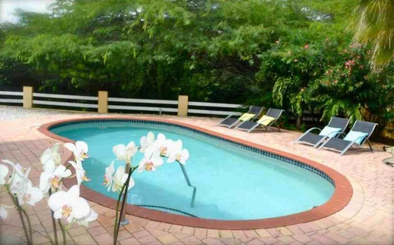 Pool - ARUBA - Luxury 6 persons VILLA with swiming pool - Oranjestad - rentals