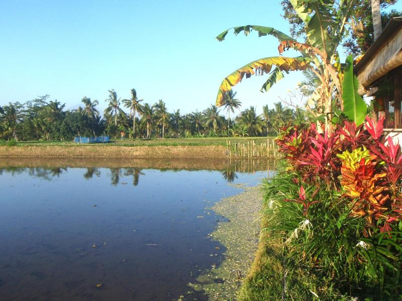 View of Rice Paddies - Matahari Villas - Awakening into a Dream - Bali - rentals