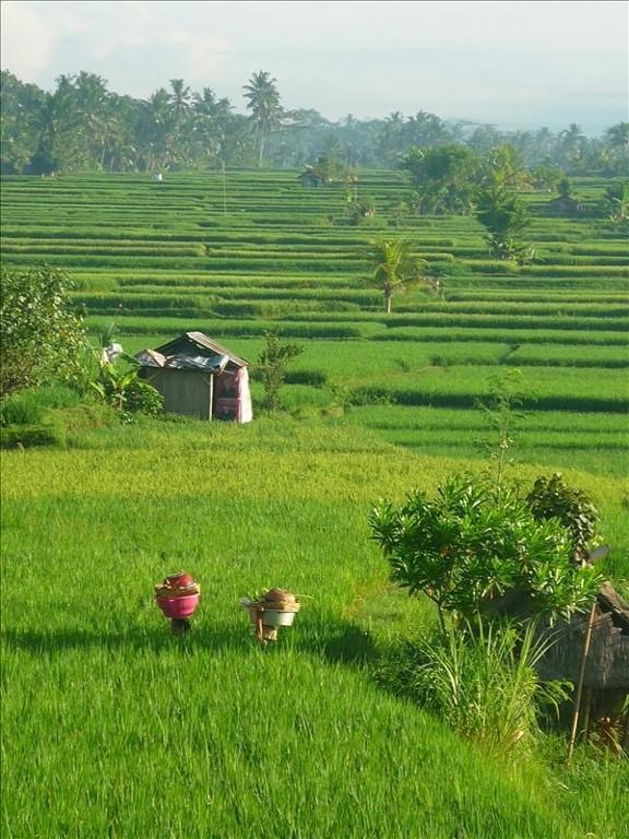 Our Forever views - Villa Satori-Luxury 3 BR Villa-10m Stroll to Ubud - Ubud - rentals