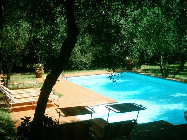 The swimmingpool nestled among olive trees - Traditional Tuscan villa, swimming pool, wifi, parking, walk to Florence, no car needed, sleeps up to 14 - Florence - rentals