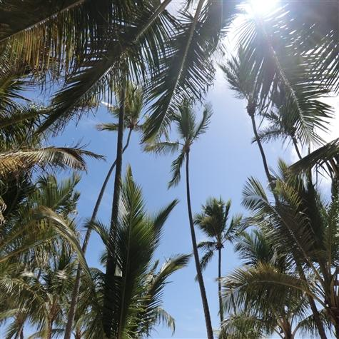 Ahhhh, Palm trees and sunshine......does it get any better? - Estrella del Mar 2BR minutes from Bavaro beach - Punta Cana - rentals