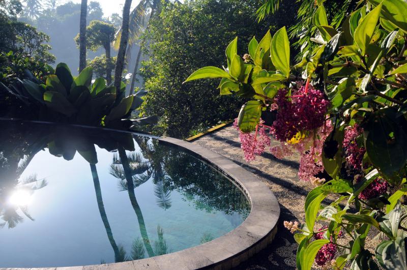 swimming pool - Luxurious, rice-field valley view villa,Ubud,4BR - Ubud - rentals