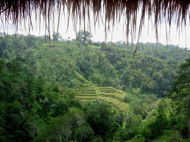 View - Tranquil,luxury 5 bedrooms Resort and Spa in Ubud - Ubud - rentals