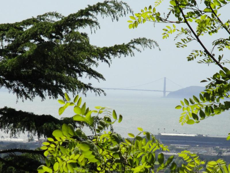 Golden Gate Bridge views - Golden Gate Views- Large Kitchen & Private Laundry - Berkeley - rentals