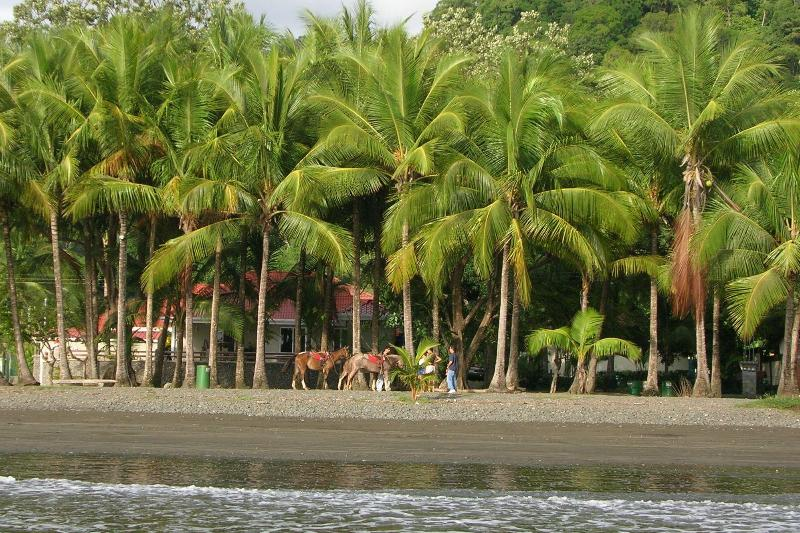 Horseback riding on the beach - Luxury condo located in Best Part of Jaco Beach! - Jaco - rentals