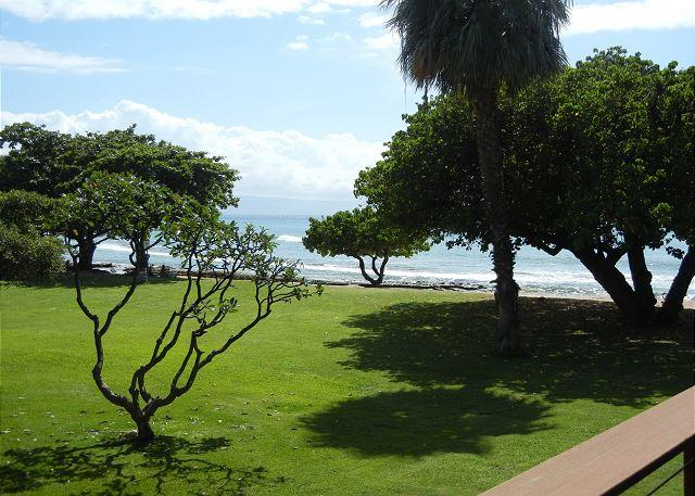 Hale Kai # 211 - Your Home by the Sea in West Maui - Image 1 - Lahaina - rentals