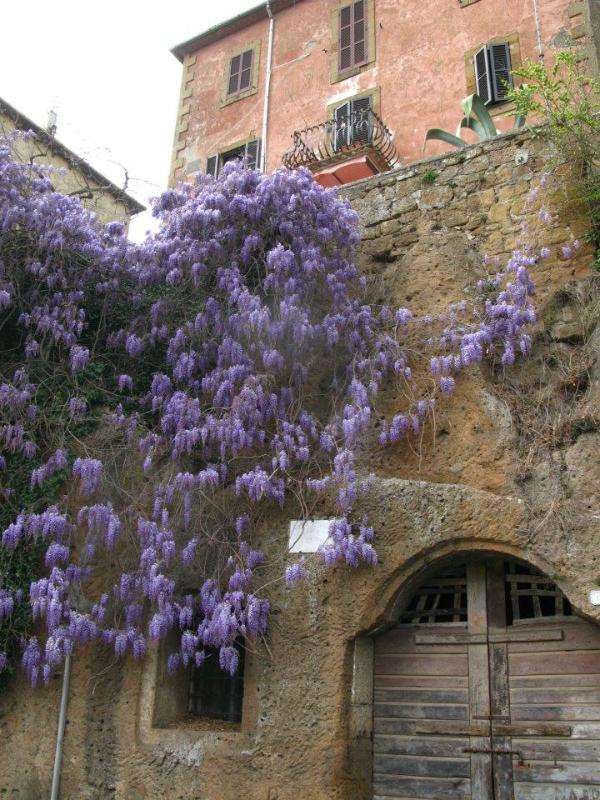 the house from below - Parco Orsini flat with garden, parking, old town - Pitigliano - rentals