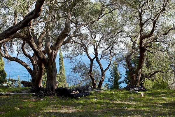Gardens and view - Katina Studio (near Loggos, Paxos) - Loggos - rentals