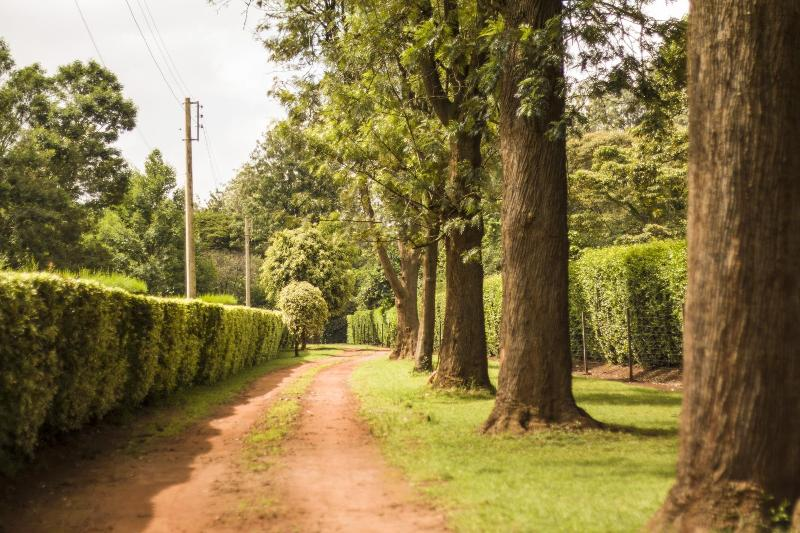 Turaco Cottage - Image 1 - Nairobi - rentals