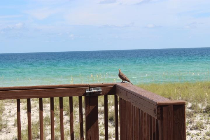 View from the balcony - 3 Bedroom 3 Bathroom on the Gulf - Navarre - rentals