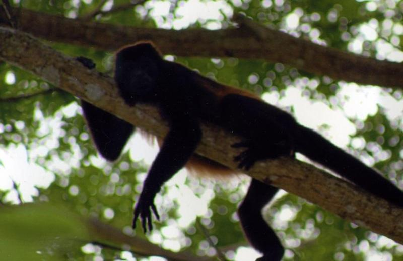 In the jungle - Casa de las Mariposas - Escape to Paradise - Tambor - rentals