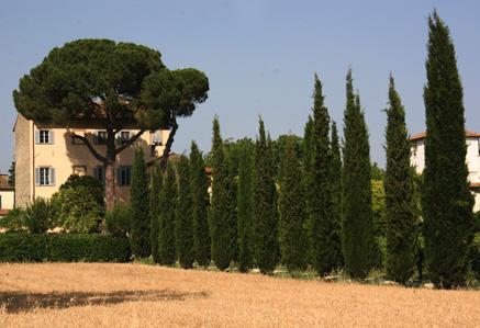 Leone - Image 1 - Arezzo - rentals