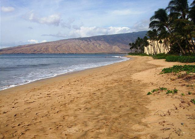Kihei Kai #15 Condo is Only Steps to Sugar Beach. Fully Updated! Great Rates! - Image 1 - Kihei - rentals