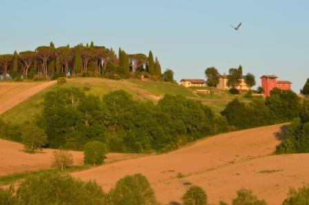 the view of the farma - Casale, house  in an organic farmstay in Umbria - Umbertide - rentals