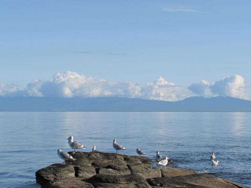 EVEN THE SEA GULLS RELAX - VANCOUVER ISLAND - ELES ESCAPE B and B by the SEA - Lantzville - rentals