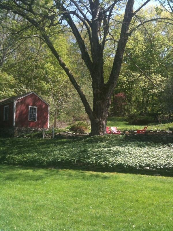 Garden with massive maple tree - Rhubarb Hill, a Charming 1850's Farmhouse - New Preston - rentals