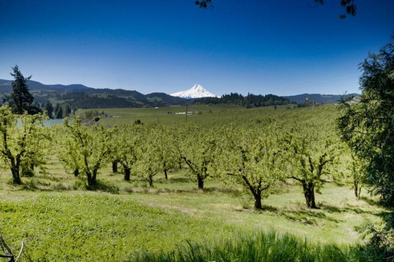 Orchard View Estate - Image 1 - Hood River - rentals