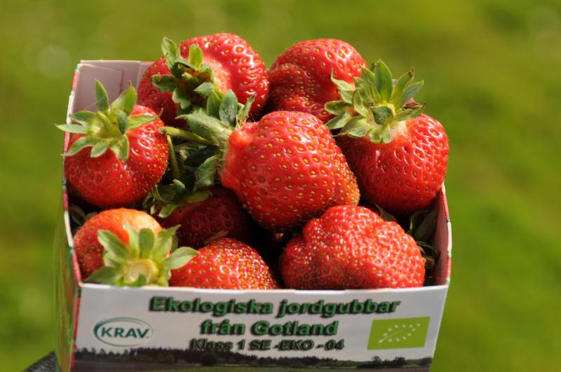 Enjoy our Strewberries as well. - Nickarve 308B - Visby - rentals