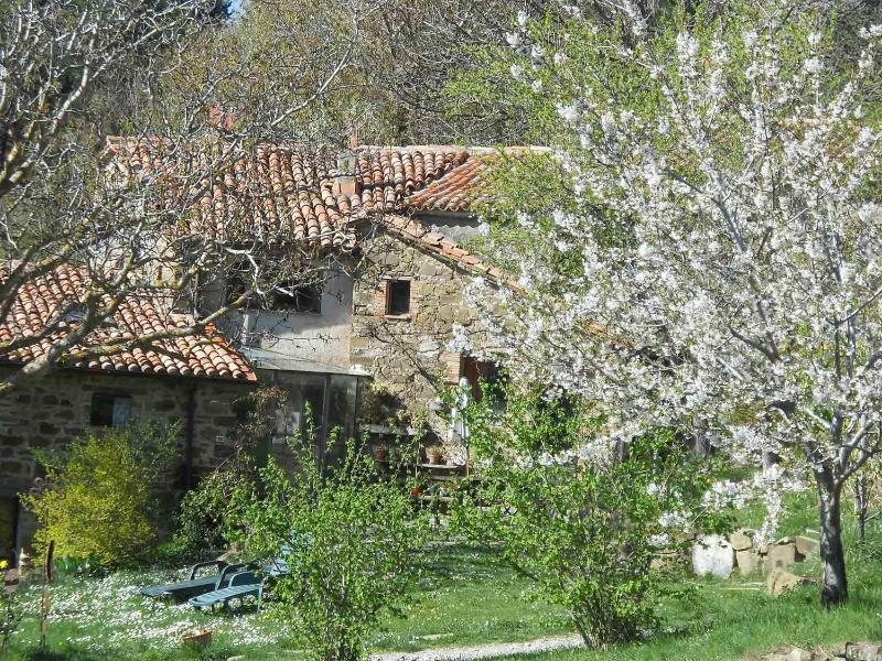 Lucashouse  Fontepetra - Image 1 - Seggiano - rentals